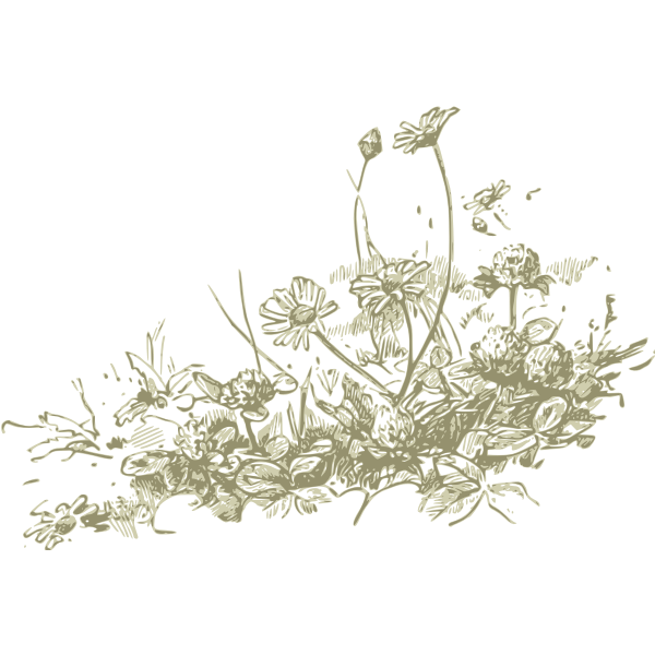 Wild flowers vector drawing