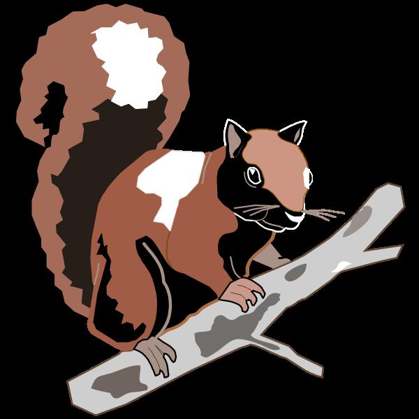 Wood squirrel