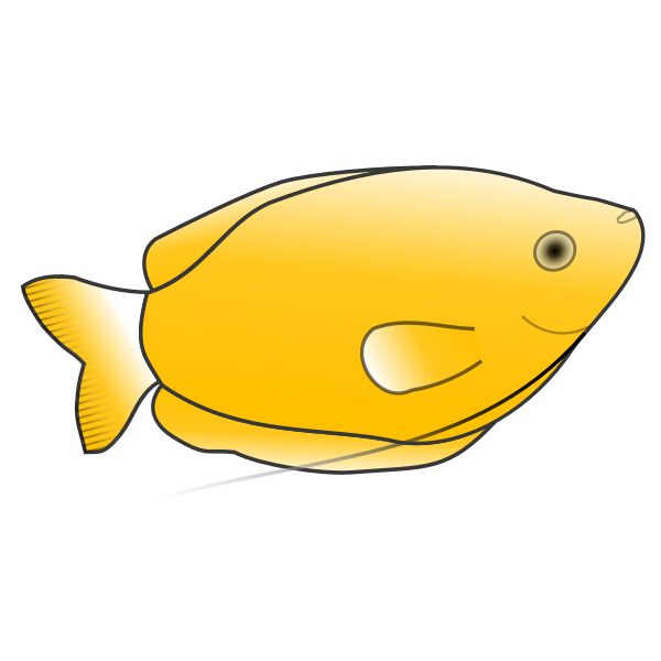 Yellow Gourami