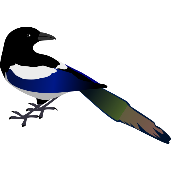Magpie bird vector image