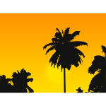Palm tree silhouette in the sunset