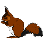 Squirrel-1571484848