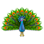 Peacock vector clip art