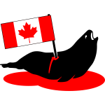 Stabbed Canadian seal