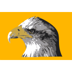 Head of a bald eagle vector drawing
