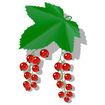 Red berries image