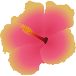 Hibiscus blossom flower