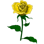 Rose 27 (colour 2)