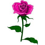 Rose 27 (colour 3)