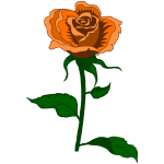 Rose 27 (colour 4)
