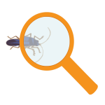 Magnifying glass and bug