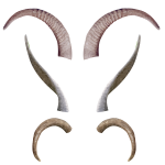 horns antlers body parts