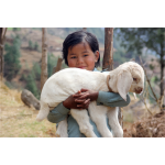Girl carrying a lamb