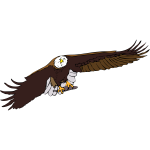 Bald eagle vector graphics