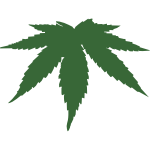 Cannabis leaf color vector image