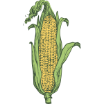 Ear of corn vector image in color