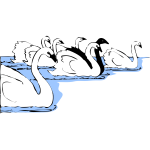 Swans in water vector image