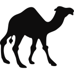 Camel silhouette vector image