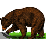 Colored bear on a walk vector illustration