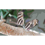 Butterfly Mate 2015061232