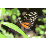 Butterfly on Leaves 2015061235