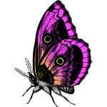 Butterfly in purple colors