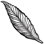 Outlined feather