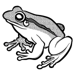 Vector clip art of waiting frog in black and white
