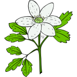Vector image of anemone piperi plant