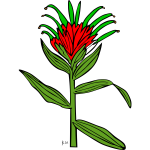 Vector illustration of castilleja miniata plant