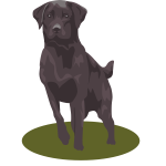 Black lab dog vector image
