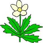 Anemone canadensis vector
