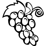 Grapes vector drawing