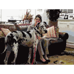 Harlequin Great Dane 2015020725