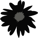 Daisy in black color