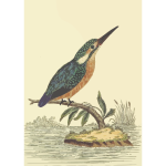 Kingfisher bird on a tree branch vector image