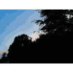 Late Afternoon in the Forest 3 2015071545