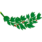 Laurel branch with red berries vector image
