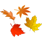 Autumn leaves selection vector image