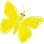Citrus fruit butterfly