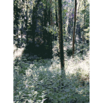 Lichtscheid Forest Again 1 2015071506