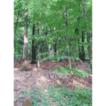 Lichtscheid Forest Again 1 2015071547