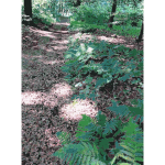 Lichtscheid Forest Again 2015071506