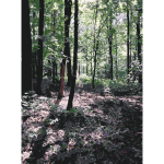 Lichtscheid Forest Again 2015071542