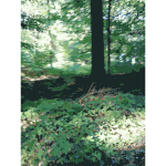 Lichtscheid Forest Again 2015071552