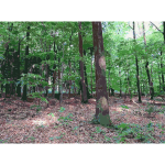 Lichtscheid Forest Again 3 2015071547
