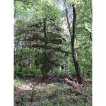 Lichtscheid Forest Again 4 2015071547