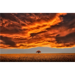 Lone Tree Under A Scorched Sky
