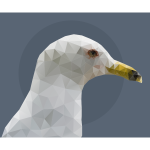 Low Poly Sea Gull