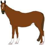 Vector illustration of brown horse standing
